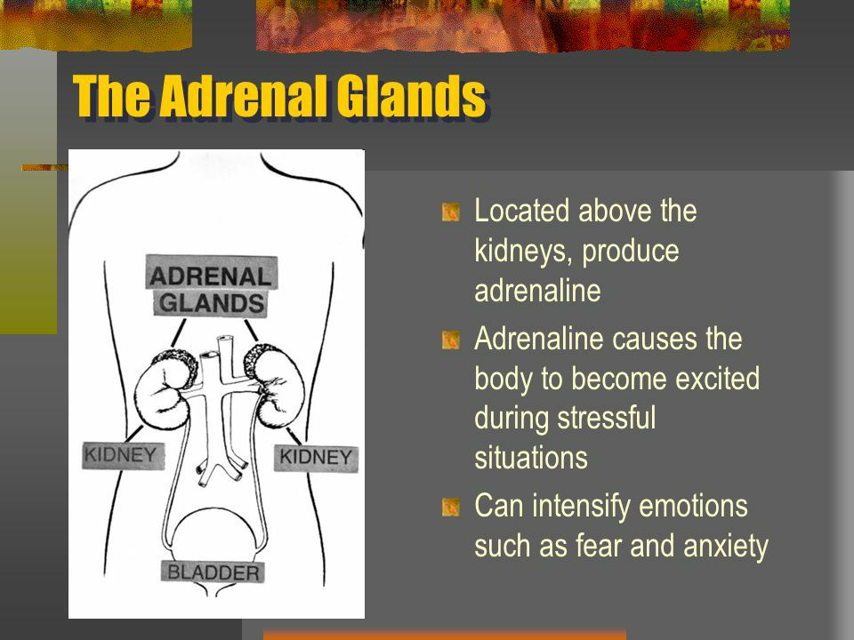 Anxiety and its relation to the adrenal glands