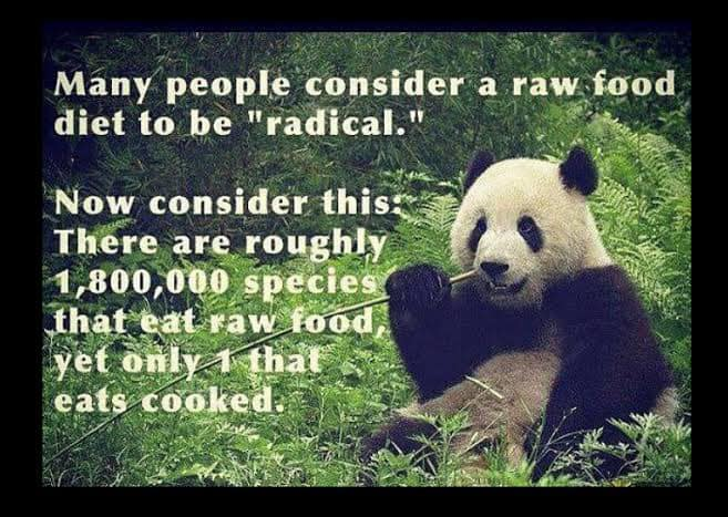 Raw living foods the source of nourishment for all living creatures